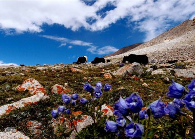 Flora and fauna of Ladakh